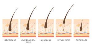 Biologie van haar | Hair Science Institute